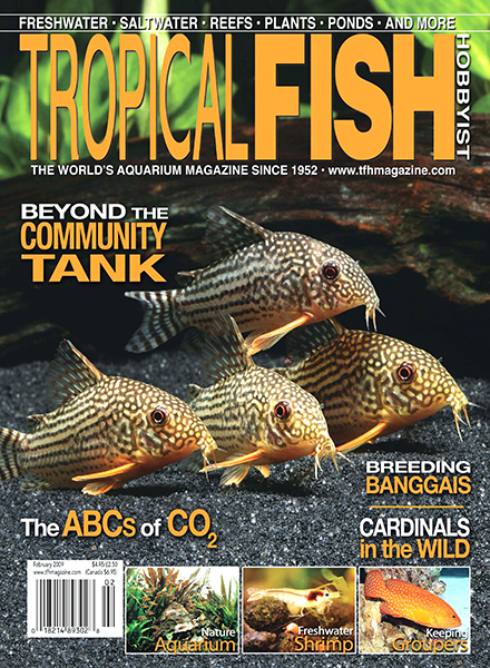 Download tropical fish hobbyist february 2009 pdf magazine for Tropical fish magazine