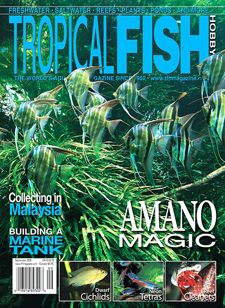 Download tropical fish hobbyist september 2008 pdf for Tropical fish magazine
