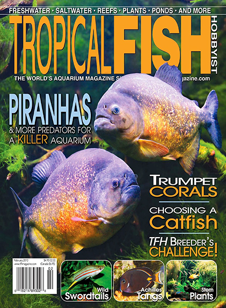 Download tropical fish hobbyist february 2010 pdf magazine for Tropical fish hobbyist
