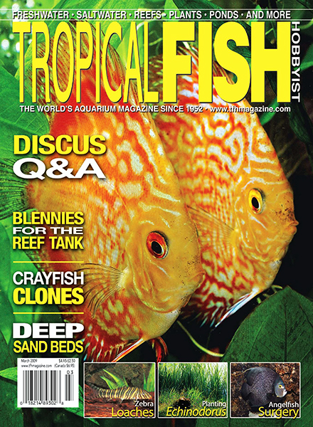 Download tropical fish hobbyist march 2009 pdf magazine for Tropical fish magazine