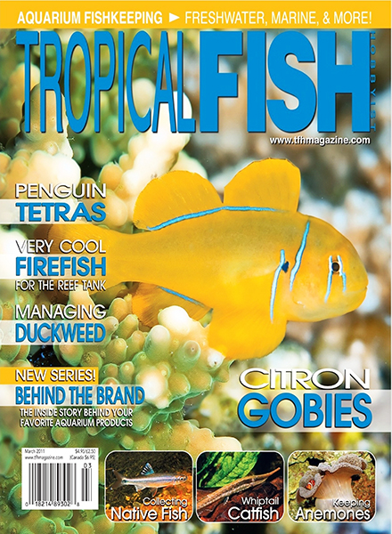 Download tropical fish hobbyist march 2011 pdf magazine for Tropical fish hobbyist