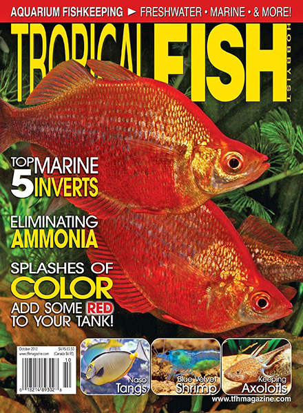 Download tropical fish hobbyist october 2012 pdf magazine for Tropical fish magazine