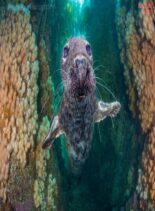 Underwater Photography – March-April 2021